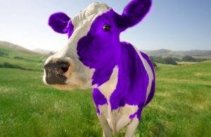 purple-cow1