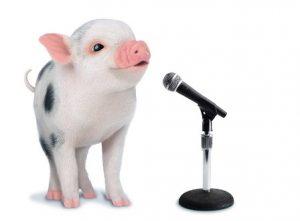 Pig-Singing_meps